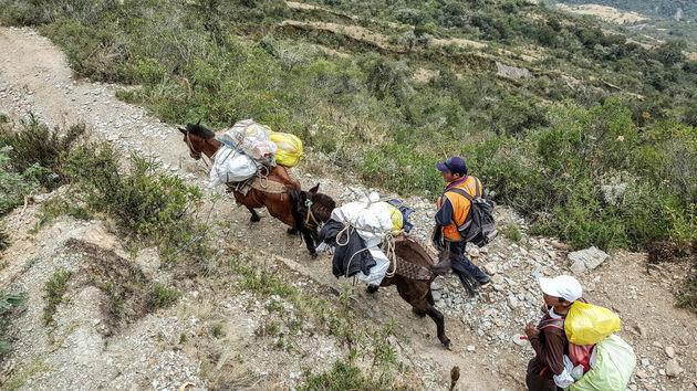 Salkantay-Trek-paarden