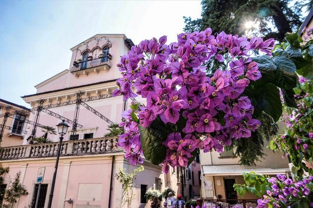 Salo-brescia-bloemen