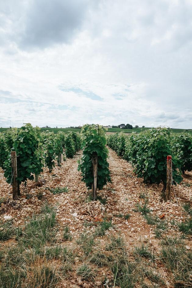 sancerre-wijnvelden