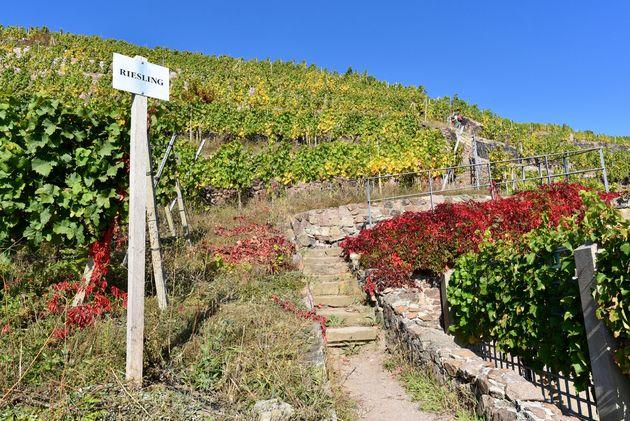 Schloss-Wackerbarth-wijn-2