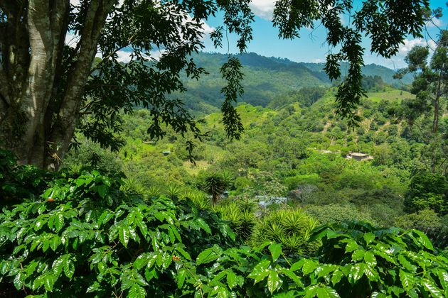 Seis-Valle-honduras