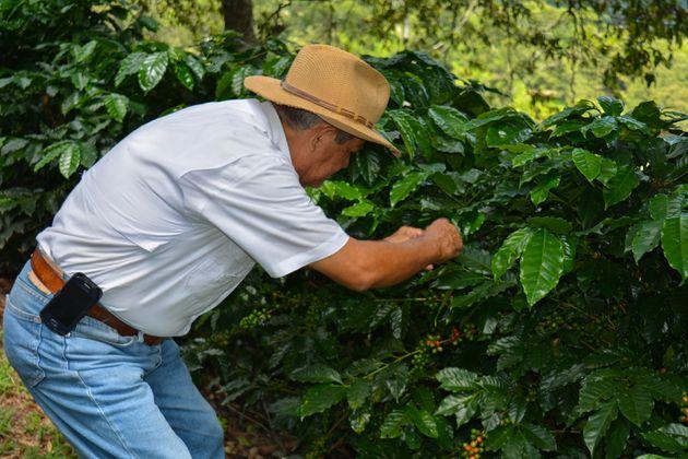 Seis-Valle-koffieplantage-