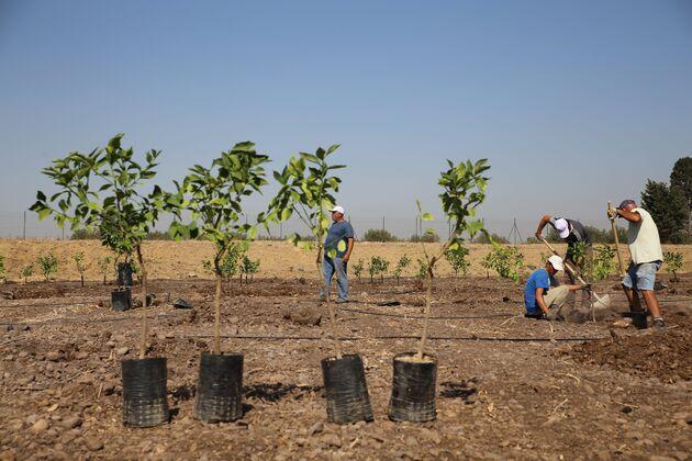 sicilie-nieuwe-bomen-treedom