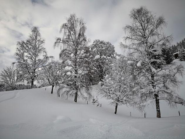 Ski Amadé-ansichtkaart-mooie-besneeuwde-bomen.