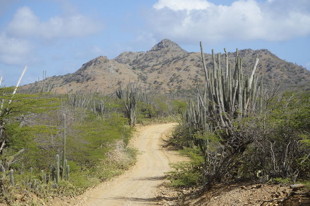 Slagbaai-Bonaire-Roadtrip