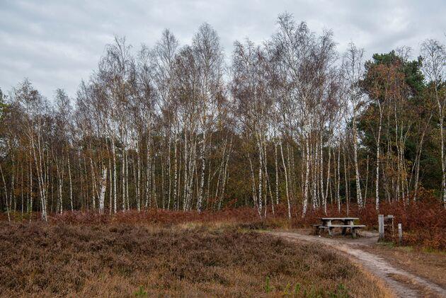 smokkelroute-strijbeek-heide