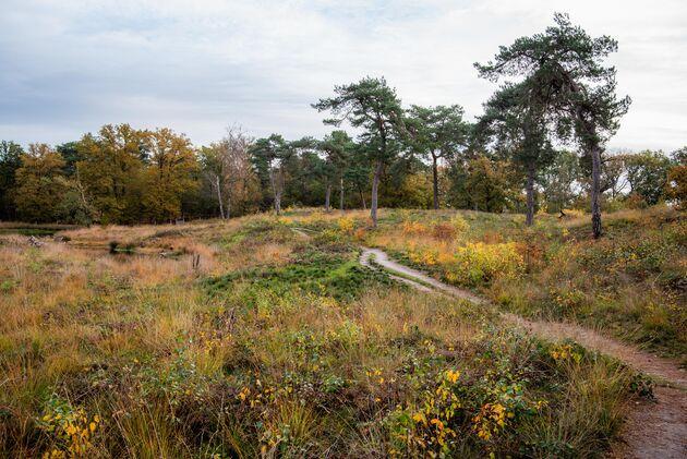 smokkelroute-strijbeek-natuur