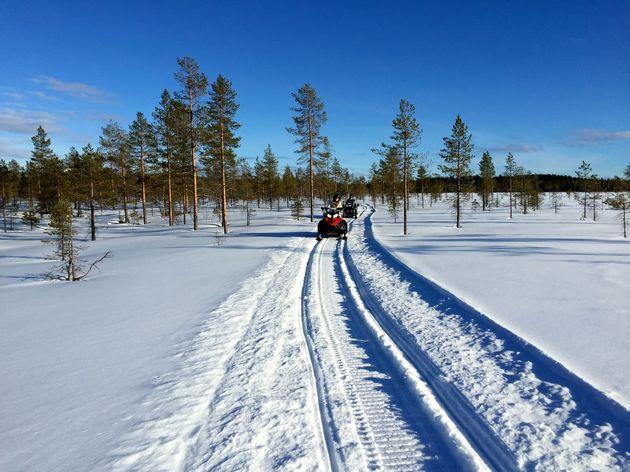 sneeuwscooteren-bomen