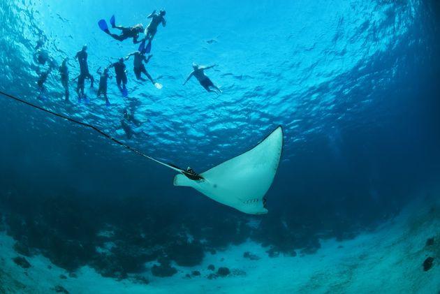 snorkelen-belize
