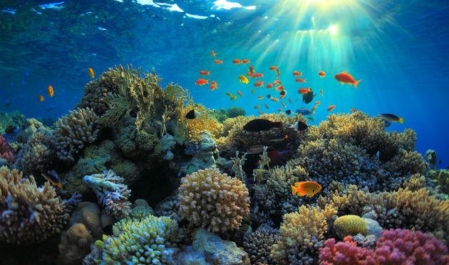 snorkelen-kaaiman-eilanden
