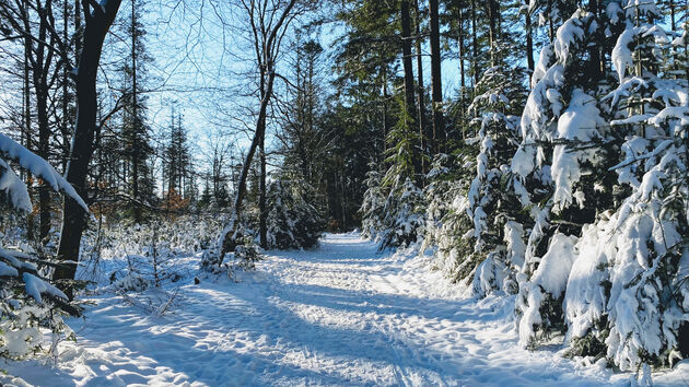 Speulderbos_sneeuw