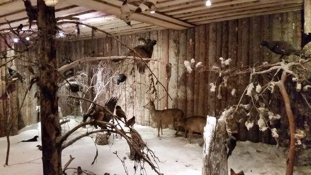 Svansele-wildernis-tentoonstelling
