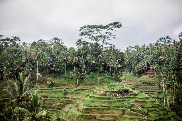 Tegalalang-rijstvelden
