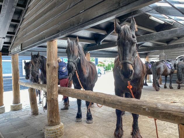 terschelling-paardrijden