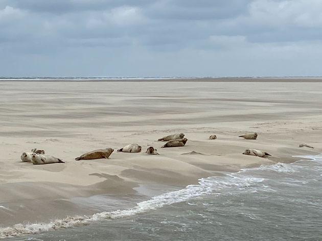 terschelling-zeehonden-spotten