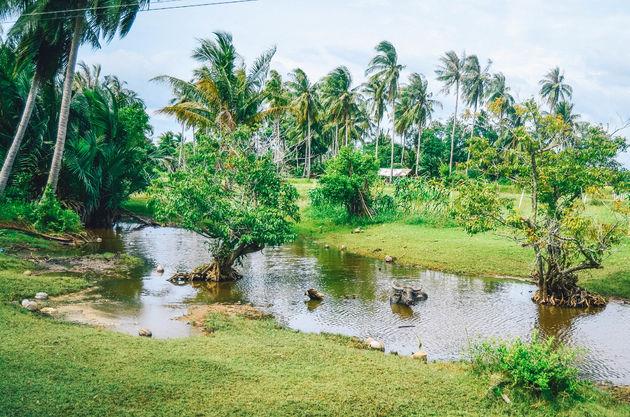 trang-rijstvelden