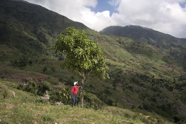 treedom-haiti