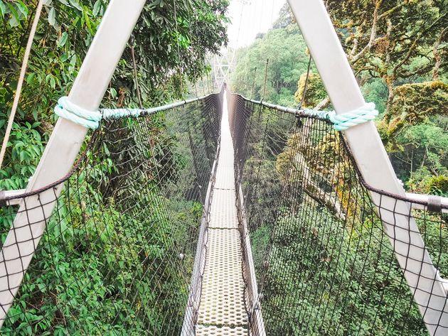 Tweede deel loopbrug Nyungwe National Park Rwanda