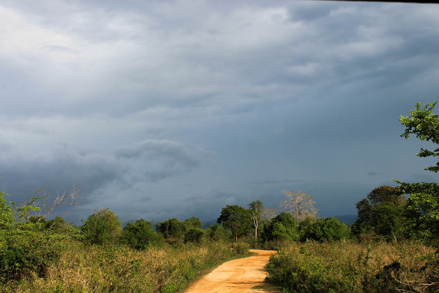 Uda-Walawe-National-Park