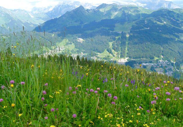 Uitzicht-kruiden-bergen