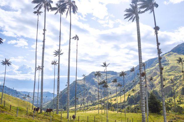 vakantiebestemmingen-2020-colombia