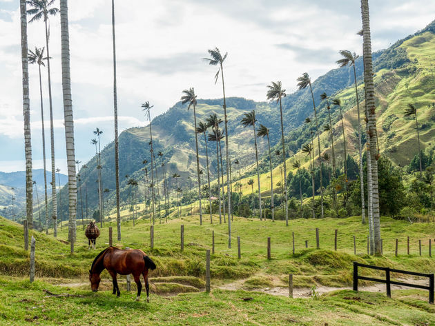 valle-cocora-colombia