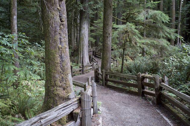Vancouver_island_bos