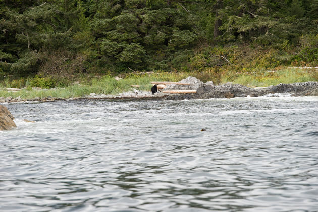 Vancouver_island_zwarte_beer