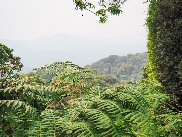 Varens Nyungwe National Park