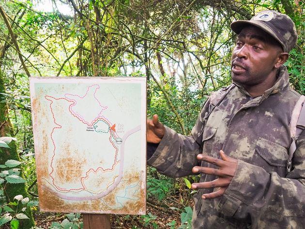 Verschillende wandelpaden Nyungwe Rwanda
