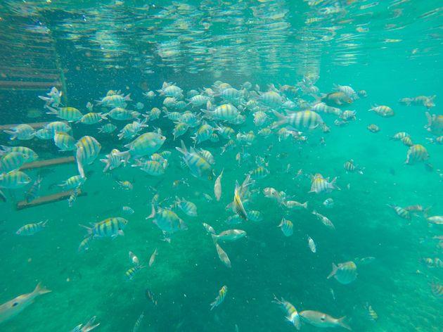 vissen-oman
