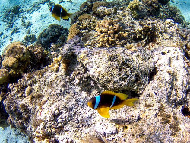 vissen-snorkelen-rode-zee
