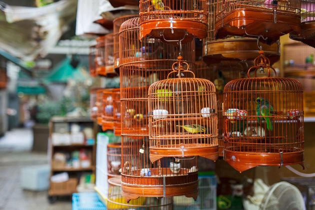 vogeltjesmarkt-antwerpen