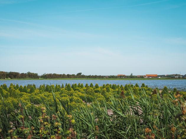 Walcherse polder Zeeland
