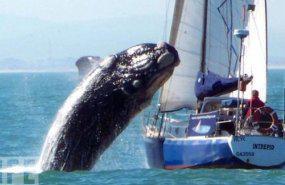walvis.jpg