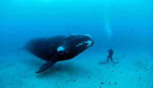 walvis1.jpg