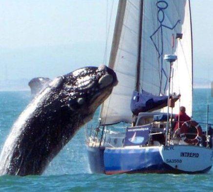 walvis2.jpg