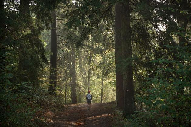 wandelen-bos-ardennen