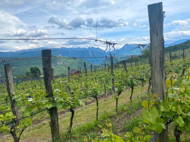wijnroute-zuid-tirol