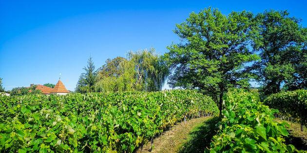 wijnvelden-gers