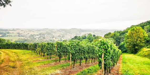 wijnvelden-Jurancon