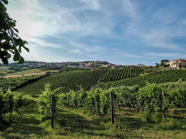 wijnvelden-La-Marche-italie