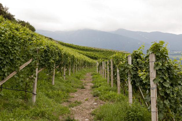 wijnvelden-zuid-tirol