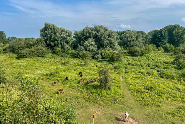 Wilde-pony-gelderland