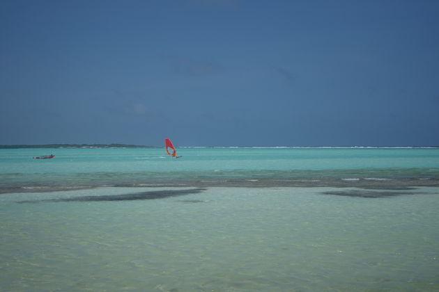 Windsurfen_Bonaire