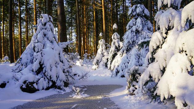 Winter_Speulderbos