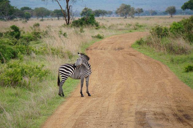 zebra-mukumi-safari-1