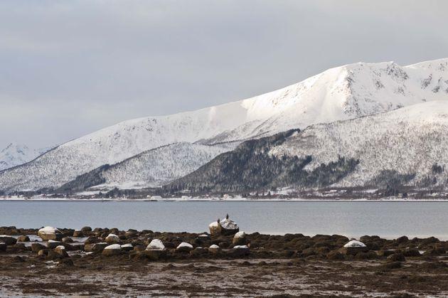zeearenden-noorwegen