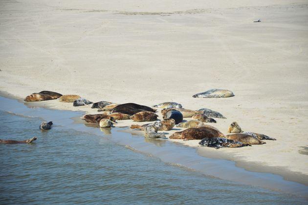 zeehonden-ameland