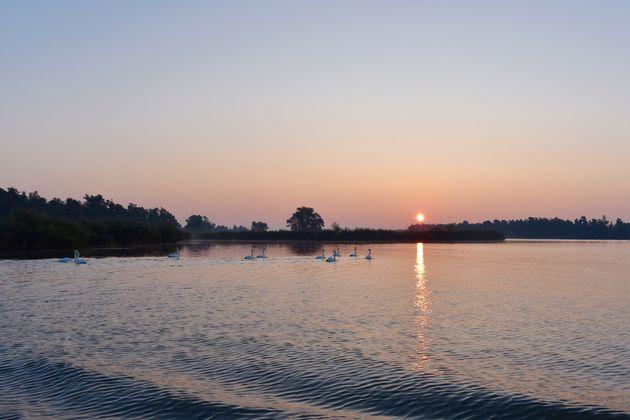 zonsopkomst-zwanen-biesbosch